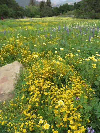 A Stewardship Triumph At The Santa Barbara Botanic Garden The Cultural Landscape Foundation