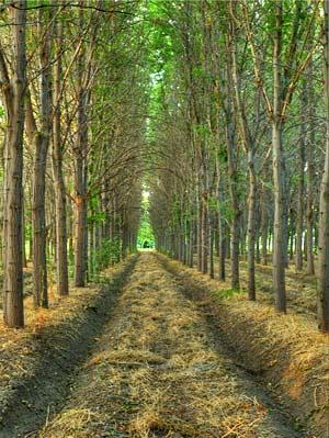 Good Arborland