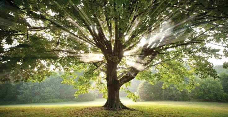Green Brook Nj >> Landslide 2010: Every Tree Tells a Story / The Cultural Landscape Foundation