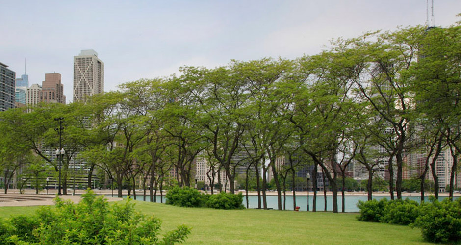 The Landscape Architecture Legacy of Dan Kiley | The Cultural ...
