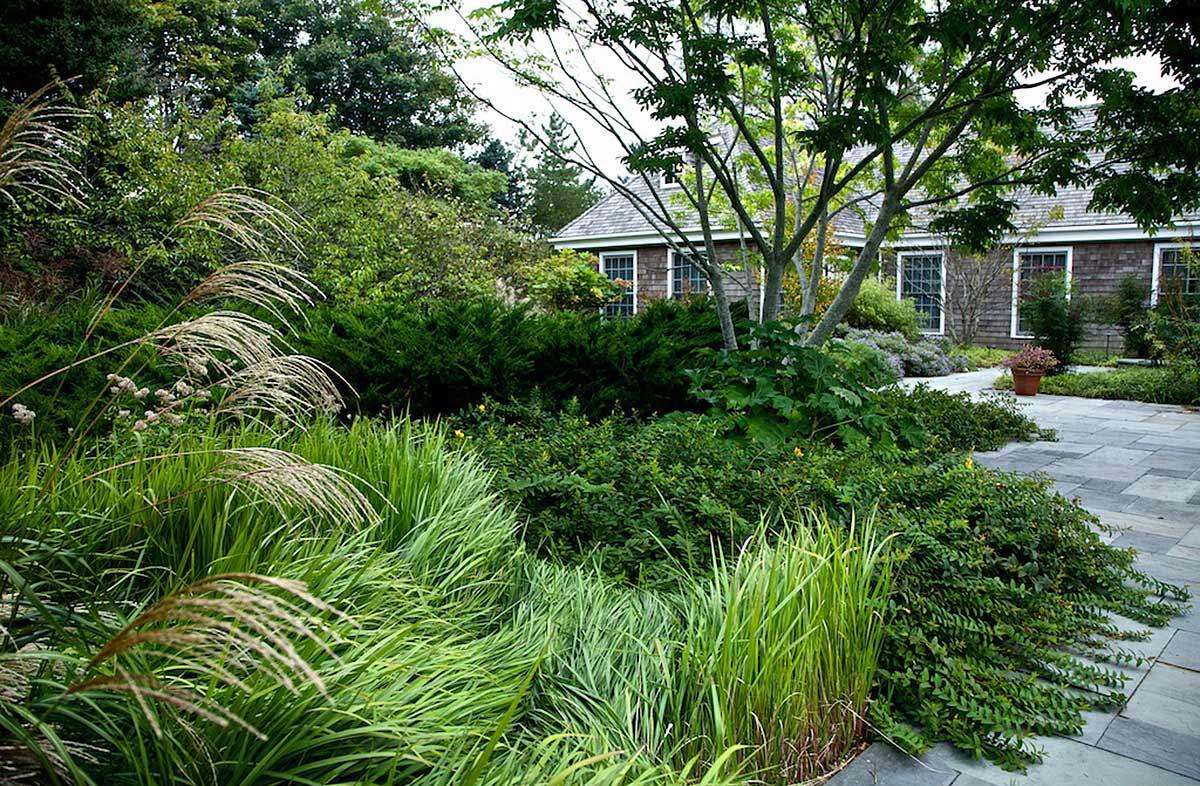 Backyard Forest Stewardship : Bold Romantic Gardens