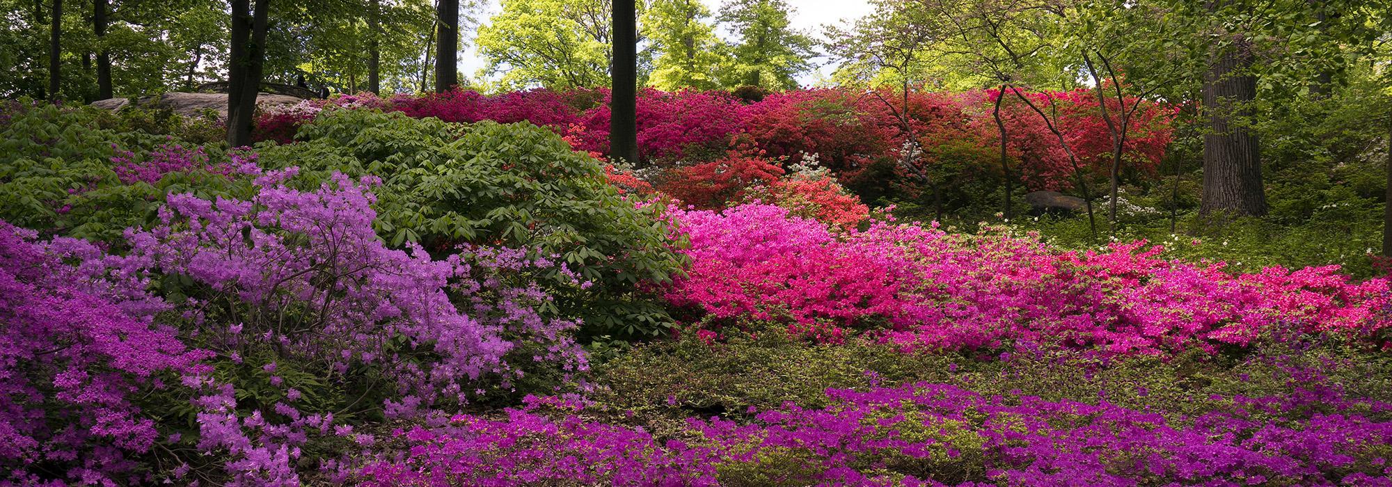 BotanicGarden_hero_SallyGall_2015.jpg