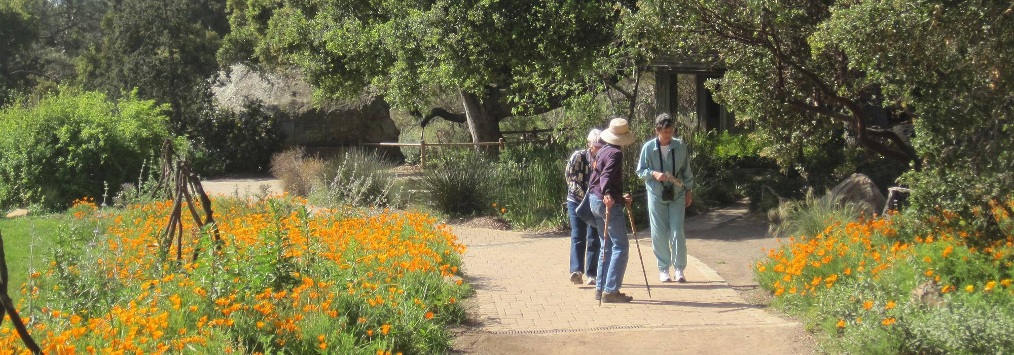 Bon Santa Barbara Botanic Garden.  CA_SantaBarbara_BotanicGarden_hero_03_CharlesBirnbaum_2010