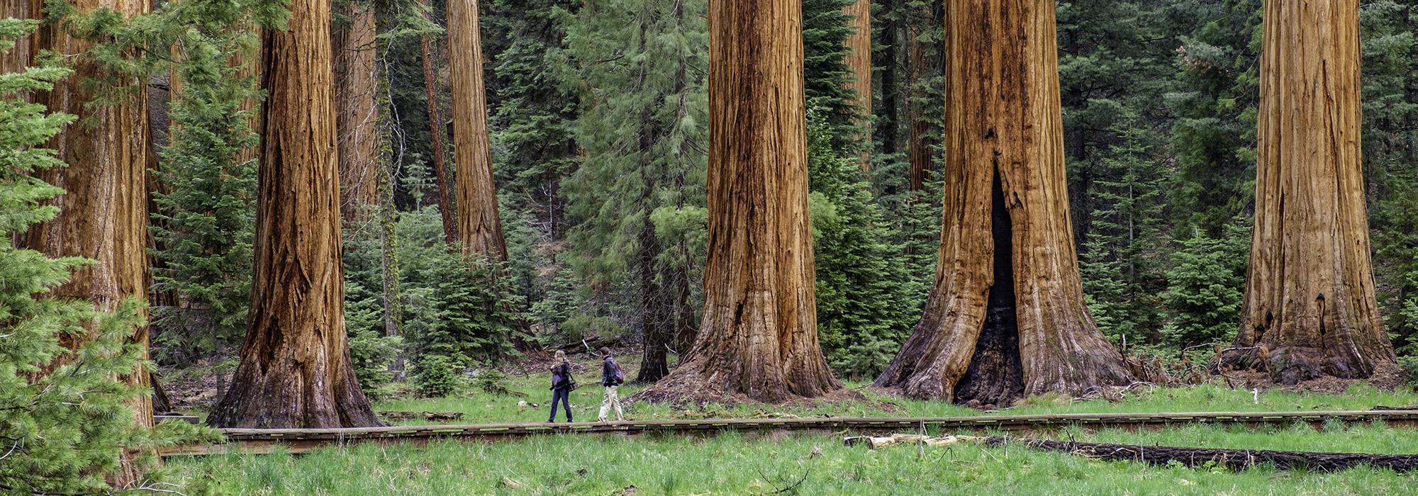 CA_SierraNevadaMountainRange_SequoiaNationalPark_byJonathanIrish-courtesySaveTheRedwoodsLeague-courtesyTCLF_2016_001_Hero.jpg
