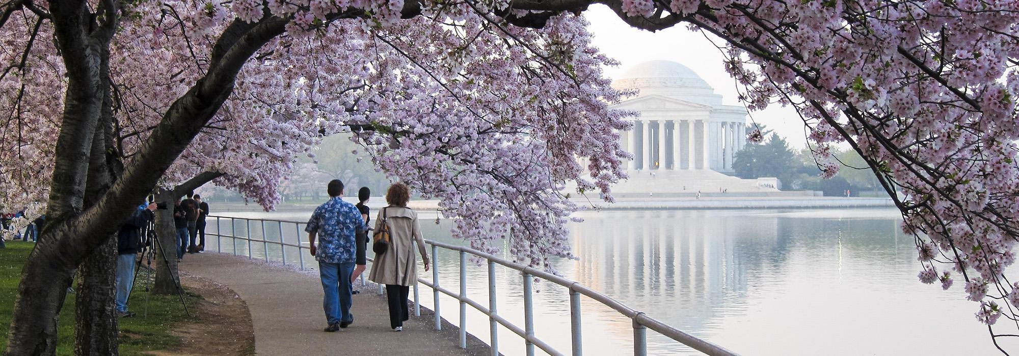CherryBlossoms_hero_CharlesBirnbaum_2012.jpg