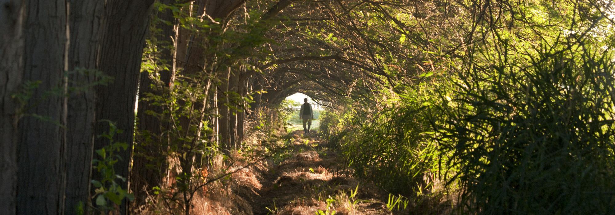 DICKMAN_Arborland_hero_01_2010.jpg