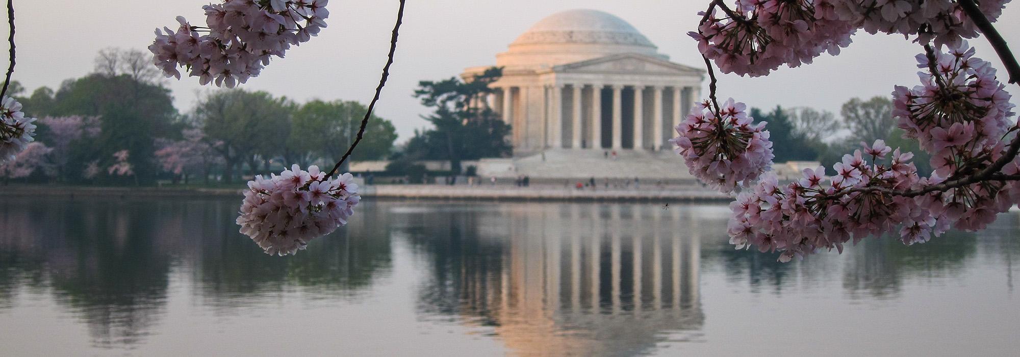 NationalMall_hero_CherryBlossoms_CharlesBirnbaum_2012.jpg