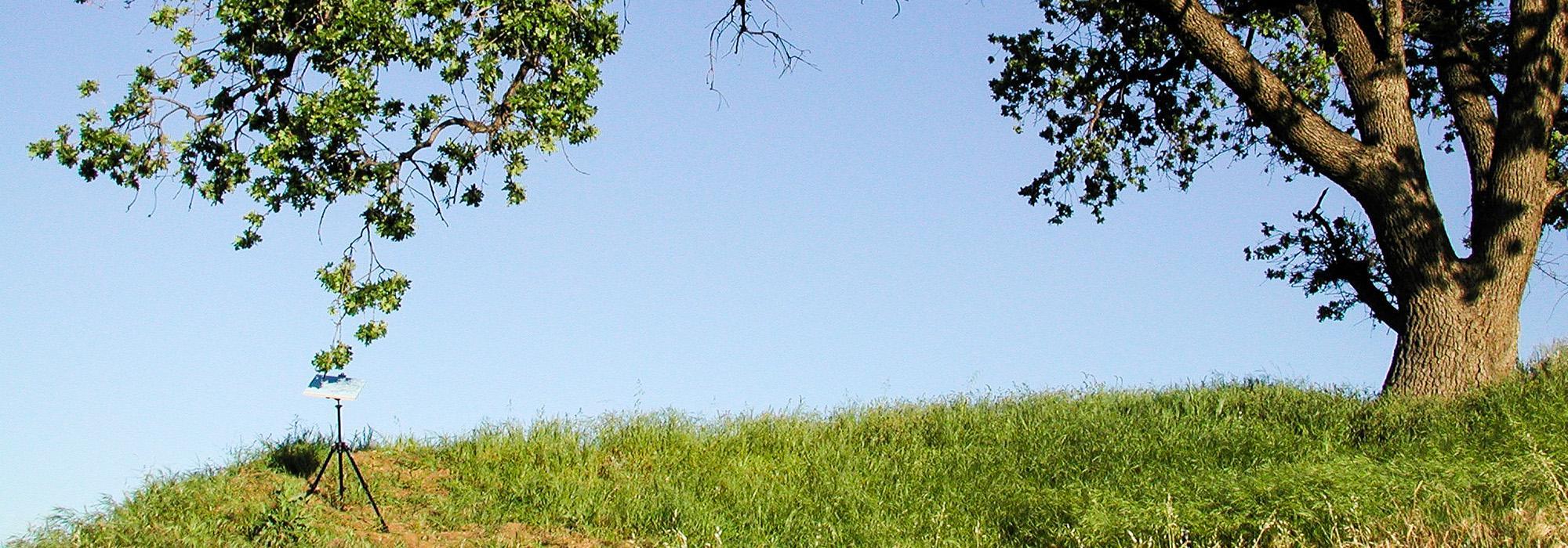 Pickett-Pat_hero_Valley Oak_Newhall Pass-CA_2003.jpg