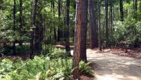 Crosby Arboretum_02
