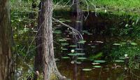 Crosby Arboretum_04