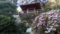 Hannah Carter Japanese Garden_07