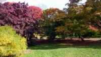 Arnold Arboretum_06