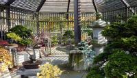 Arnold Arboretum_08