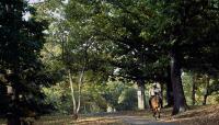 Arnold Arboretum_02