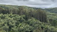 CA_MarinCounty_DruidHeights_EucalyptusAndCypressFromHillToTheNorthEast_courtesyMichaelToivonen_2018_017_Sig_2.jpg