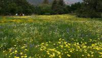 CA_SantaBarbara_BotanicalGarden8_LisaGimmy2014.jpg