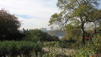 Fort-Tryon_Heather-garden-04-_Lola-Lorraine-Maruska.jpg