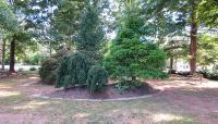 Garden-of-Righteous-Gentiles-8-Ryan-Woodward-2014.jpg