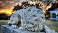LionsMuny9-Lorenzo-de-Paolis.jpg