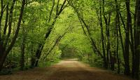 Park-Drive-Reservation-Trail---copyright-Susan-Drysdale-2013.jpg