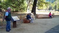 YosemiteFalls-EastSide_signature_DonFox.jpg
