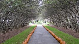 Dallas Arboretum And Botanical Garden The Cultural Landscape