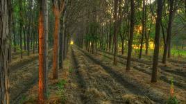 Arborland.jpg
