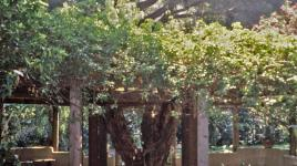 Rancho Los Alamitos_02