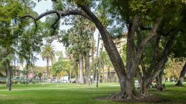 CentralPark-Pasadena.jpg