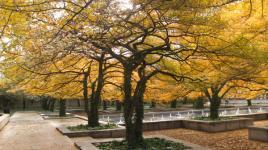 Art Institute of Chicago - South Garden