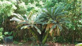 Palm Cottage Gardens_02