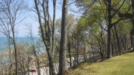 ForestPark-IL.jpg