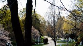 Mount Auburn Cemetery_01