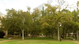 Rice University_01