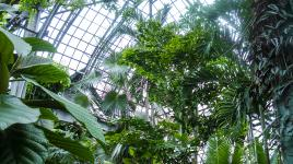 66298_signature_LincolnParkConservatory.jpg