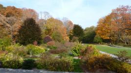 Arnold Arboretum_04
