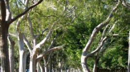 BeverlyGardensPark-sig.jpg