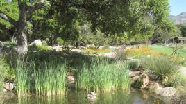 CA_SantaBarbara_BotanicGarden_signature_04_CharlesBirnbaum_2010.jpg