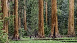 CA_SierraNevadaMountainRange_SequoiaNationalPark_byJonathanIrish-courtesySaveTheRedwoodsLeague-courtesyTCLF_2016_001_sig.jpg