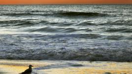 FL-Gulf-Coast-sig.jpg