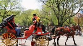 NYC-Central_Park2-sig.jpg