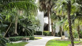 UniversityofMiami_feature_RoccoCeo_2014.jpg