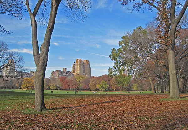 Central Park NYC_07
