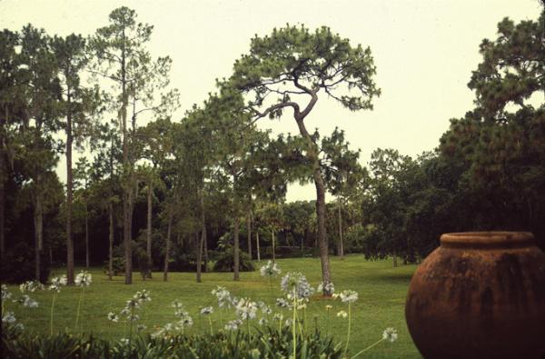 Pinewood Estate_04