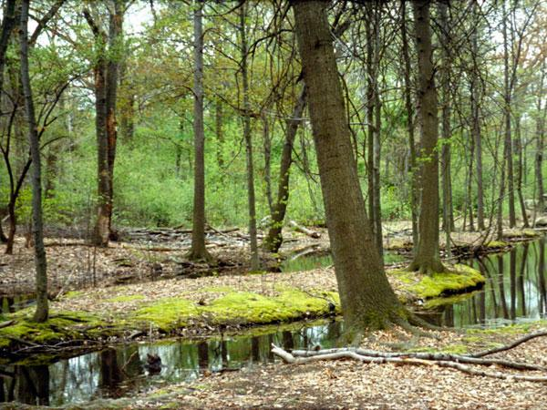 Branch Brook Park_01