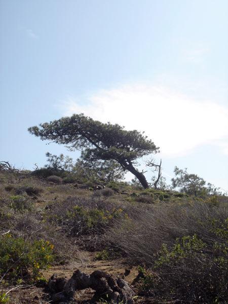 Torrey Pines State Reserve_02