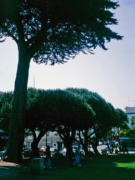 Washington Square - CA_03