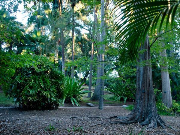 CA--UCLA---Mildred-E-Mathias-Botanical-Garden--Matthew_Traucht2014-11.jpg