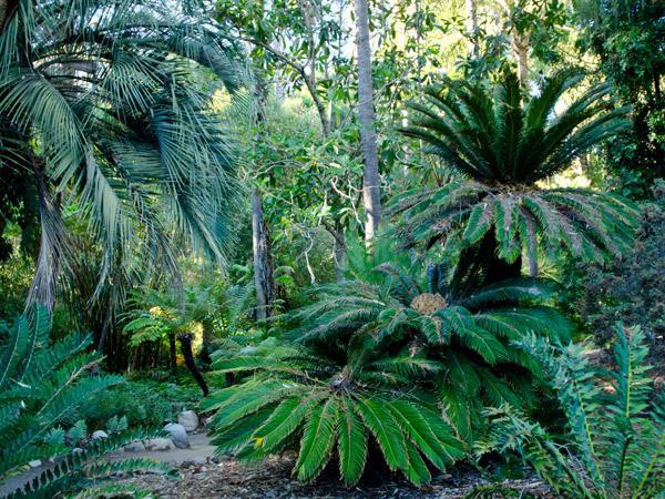 CA--UCLA---Mildred-E-Mathias-Botanical-Garden--Matthew_Traucht2014-5.jpg