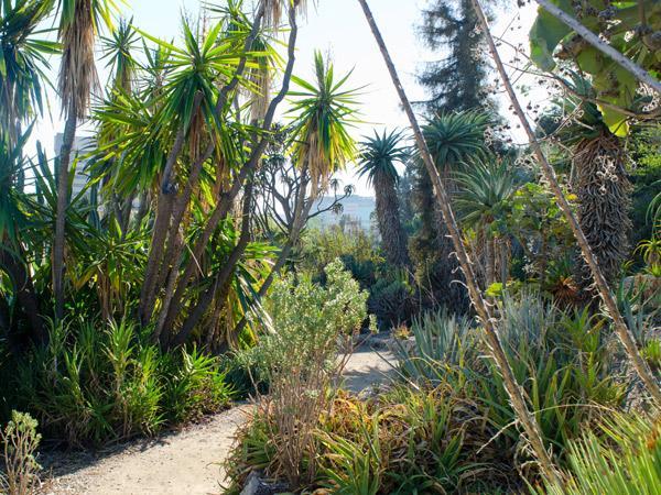 CA--UCLA---Mildred-E-Mathias-Botanical-Garden--Matthew_Traucht2014-7.jpg